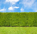 Tall Hedge Endless Seamless Pattern Stock Photos - 31628583