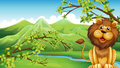 A Lion And A Mountain Stock Photo - 31676070