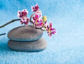 Spa Stones And Pink Orchid Royalty Free Stock Image - 31698646