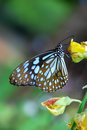 Butterfly Royalty Free Stock Photo - 3171945