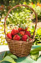 Basket Of Strawberries Royalty Free Stock Photography - 31712917