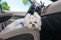 Dog In Car Stock Photography - 31723682