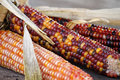 Indian Corn Royalty Free Stock Photos - 31735098