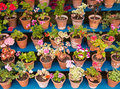 Garden Plants In Pots Royalty Free Stock Photography - 31751857