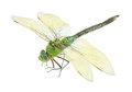 Dragonfly Stock Image - 31753921
