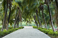 Footpath In Coconut Garden. Stock Images - 31769154
