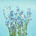 Blue Forget-Me-Not Flowers Royalty Free Stock Photography - 31786717