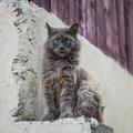 Dirty Street Cat Sitting Outdoors Stock Photos - 31797403