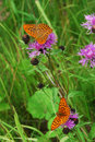 Two Butterflies Stock Images - 3185954