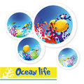 Colorful Images Of Underwater Ocean Life Stock Images - 31824024
