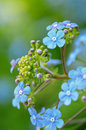Close-up Of Violet Flowers Stock Images - 31838674