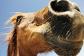 Horse S Snout Against Sky Royalty Free Stock Photography - 31842117