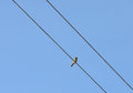 Bird On A Wire Stock Photography - 31857572