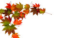 Colorful Autumn Leaves Stock Photography - 31868952