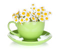 Green Tea Cup With Camomiles Stock Images - 31888984