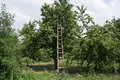 Ladder On Cherry Tree Stock Images - 31895314