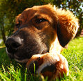 Puppy Close Up Stock Images - 3192054