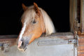 Horse In Stable Royalty Free Stock Images - 31933509