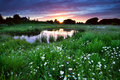 Sunset Over Meadow With Many Daisy Flowers Royalty Free Stock Images - 31934079