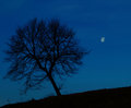 Lonely Tree At Night Royalty Free Stock Photography - 31936167