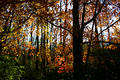 Autumn Foliage And Shadows Royalty Free Stock Images - 324289
