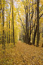 Fall Path Royalty Free Stock Images - 324309