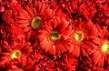 Flowers Royalty Free Stock Image - 3204066