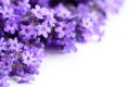 Lavender Flowers Royalty Free Stock Images - 32051099
