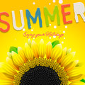 Floral Summer Background With Sunflower Royalty Free Stock Photography - 32097837