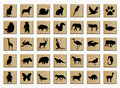 Wooden Buttons With Animals Stock Photos - 3212803