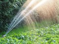 Watering Garden Royalty Free Stock Image - 32115596