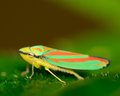 Treehopper Stock Photography - 32120142
