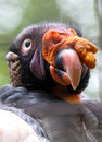 Vulture Royalty Free Stock Images - 32122309