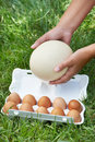 Pack Of Eggs And Ostrich Egg In Woman Hands Royalty Free Stock Image - 32175986