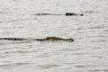 Crocodiles On Chamo Lake (Ethiopia) Stock Photos - 32202823