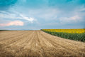 Stubble Field Stock Images - 32205464