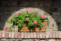 Flowers In  Terracotta Box Stock Image - 32241431