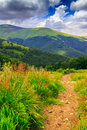 Mountain Path In The Tall Grass Royalty Free Stock Photography - 32251467