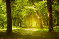 Forest Path Stock Images - 32252594