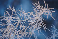 Frozen Grass Stock Photo - 32253320