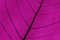 Leaf Ribs And Veins Royalty Free Stock Images - 32289839