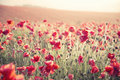 Stunning Poppy Field Landscape Under Summer Sunset Sky With Cros Royalty Free Stock Photo - 32294865