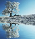 Alone Frozen Tree Royalty Free Stock Images - 3235669