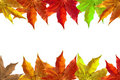 Autumn Leaves Background Royalty Free Stock Images - 3238299