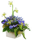 Bouquet From Orchids And Arabian Star Flower (Ornithogalum Arabi Royalty Free Stock Photography - 32306007
