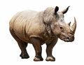 Rhino On White Background Stock Images - 32316234
