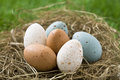 Easter Eggs In Nest Royalty Free Stock Photography - 32329987