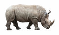 Rhino On White Background Royalty Free Stock Photo - 32362465