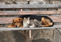 Cat And Dog Are Resting Stock Photos - 3246883