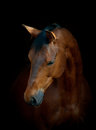 Horse On Black Royalty Free Stock Photos - 32415718